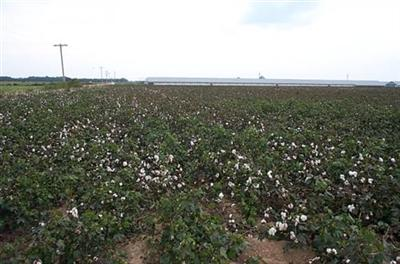 Cotton Farms for Sale